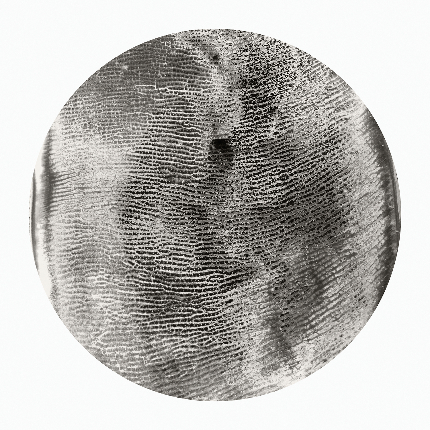 Tracy Longley Cook, Topography #2, 2012. Pigment print, 30 x 30 inches. Courtesy of the artist