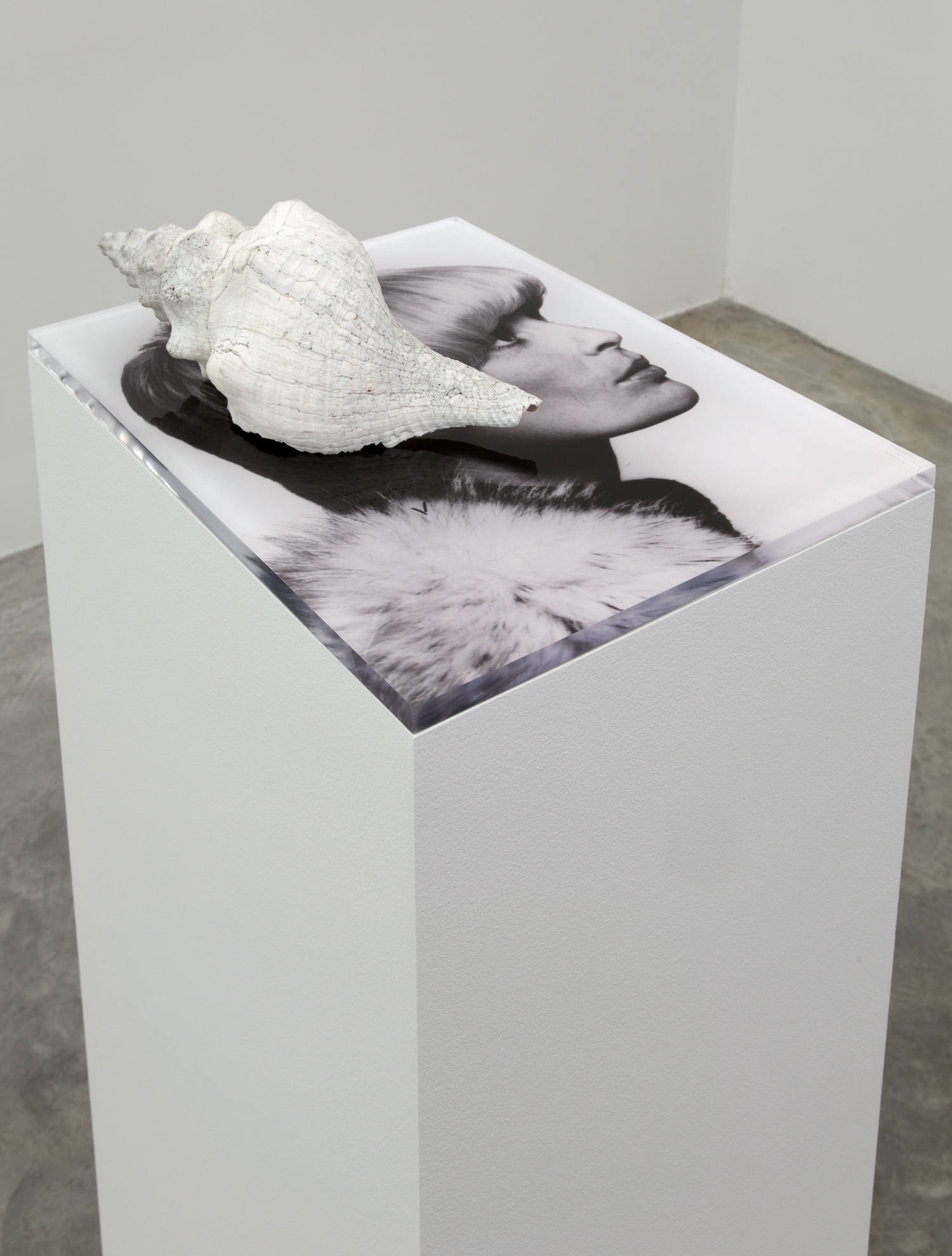 Marlo Pascual, Untitled, 2013. Digital c-print, conch shell, pedestal, Installed dimensions: 40½ x 16 x 12 inches. Photo by Jean Vong. Courtesy of the artist and Casey Kaplan, New York